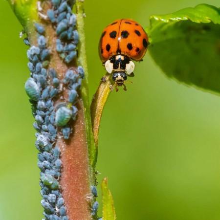 Biocontrol Pest Control