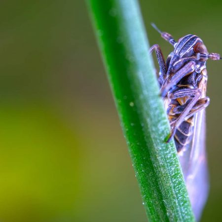 How To Get Rid of Leafhoppers