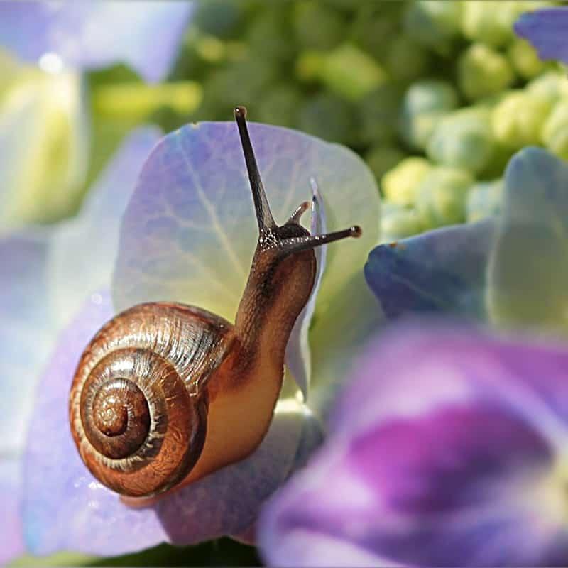 What Do Garden Snails Eat?