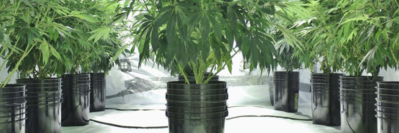 Sanitizing Your Grow Room