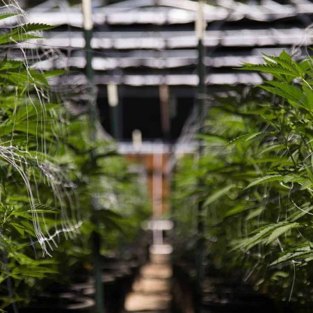 The Ultimate Guide to Sanitizing Your Grow Room