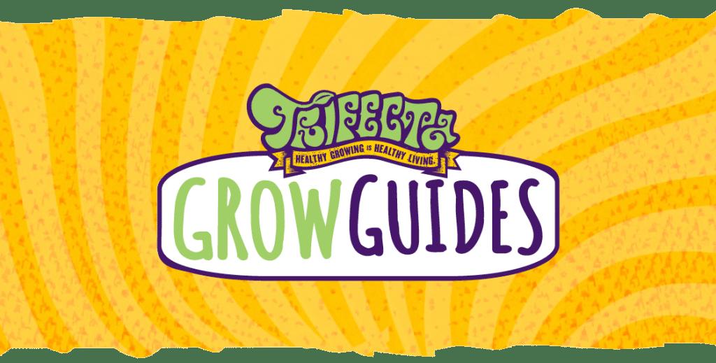 Spider Mite Guide
